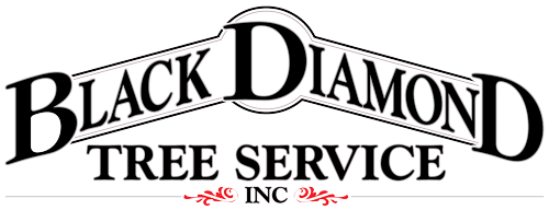 Black Diamond Tree Service